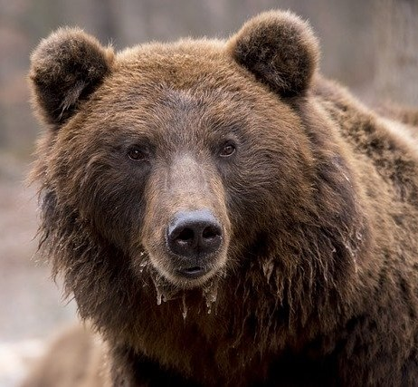 bear-1903099_640